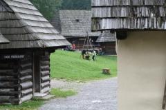 Gajdovacka_2014_7938